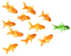 Follow-the-Leader-300x239