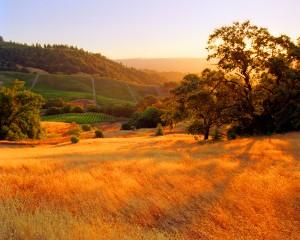 field_vineyards